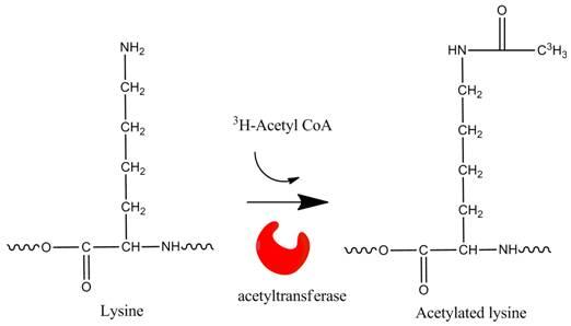 acetyl_coa_ASK_tcm137-191991 (1)
