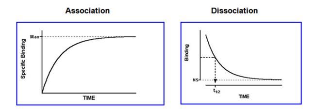 association_dissociation_ligand_ASK_tcm137-192024